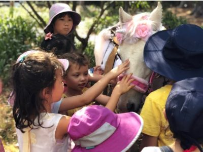 Pony Market-min