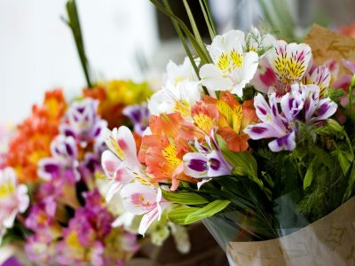 alstroemeria-flower market-min